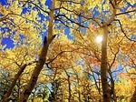 leaves-e836b70c2f_150